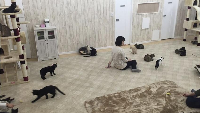 譲渡型猫カフェにゃんくる 蒲田店