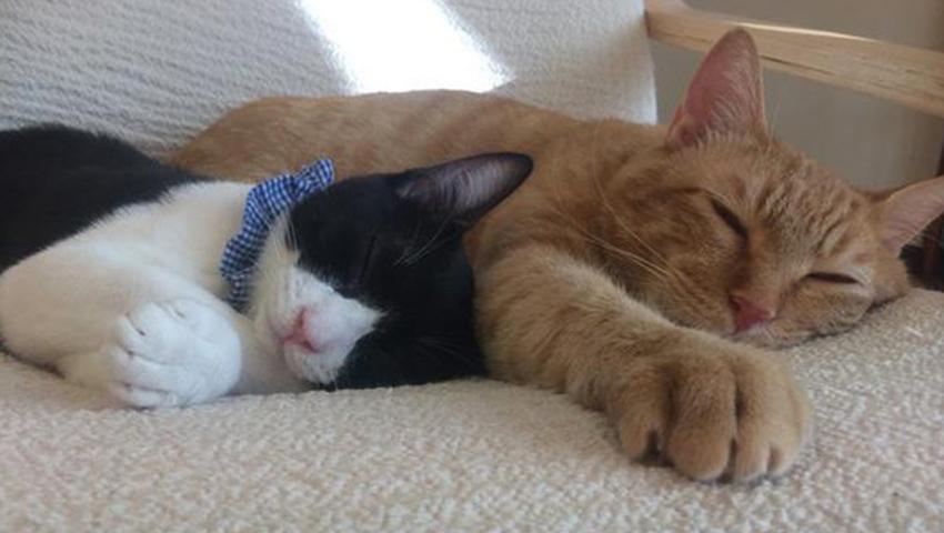 保護猫カフェ ねこかつ