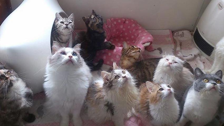 猫カフェ「猫の手」