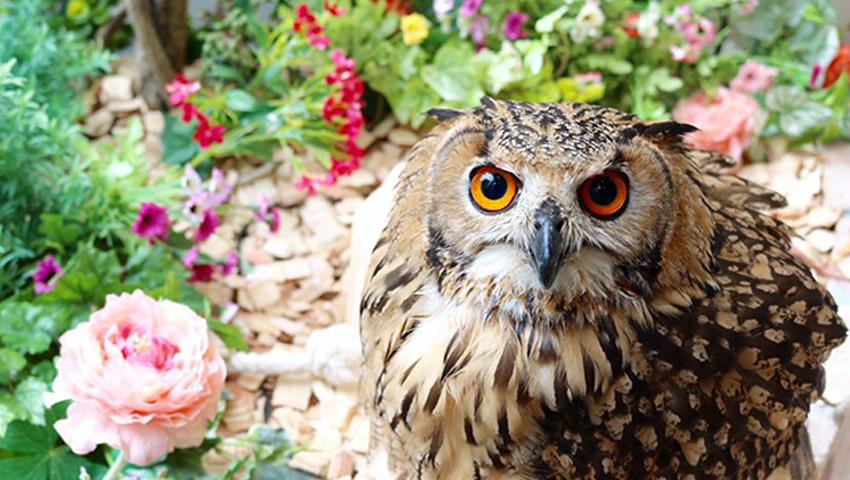 フクロウのお庭 ~Owl's Garden~