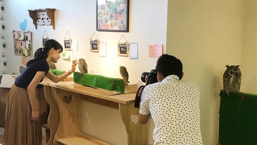 自然豊かな和歌山に誕生したフクロウカフェ「Country Owl」