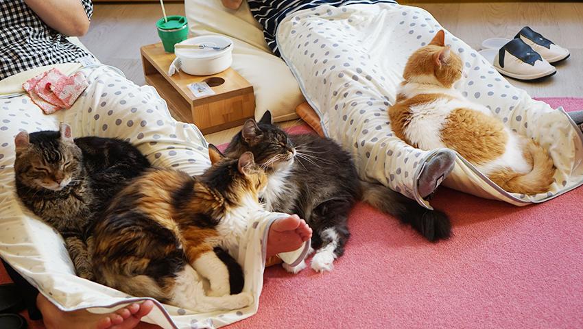 たくさんの膝乗り猫ちゃんと触れ合える奇跡の猫カフェ「Cat tail」
