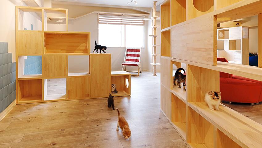 大阪梅田に世界初のおひとり様専用の「ひとり猫カフェにあにゃあ」誕生!