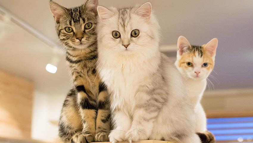 個性豊かな猫ちゃん達!