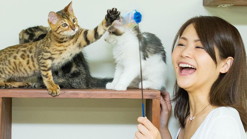 おもちゃがあれば猫達あやつるを猫使いになれます!