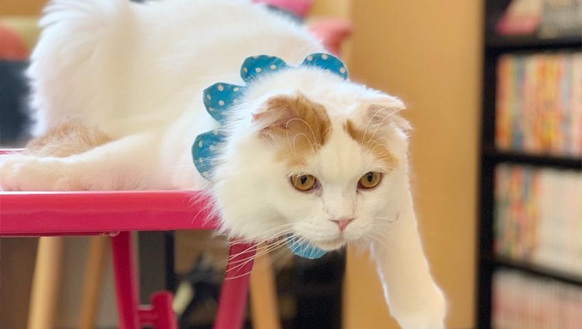 店内でのびのびと過ごす猫キャストたちをぱしゃり♪