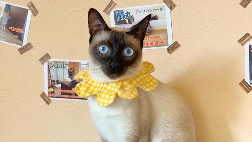 猫キャストのPOPを眺めるのも猫カフェの楽しみ方