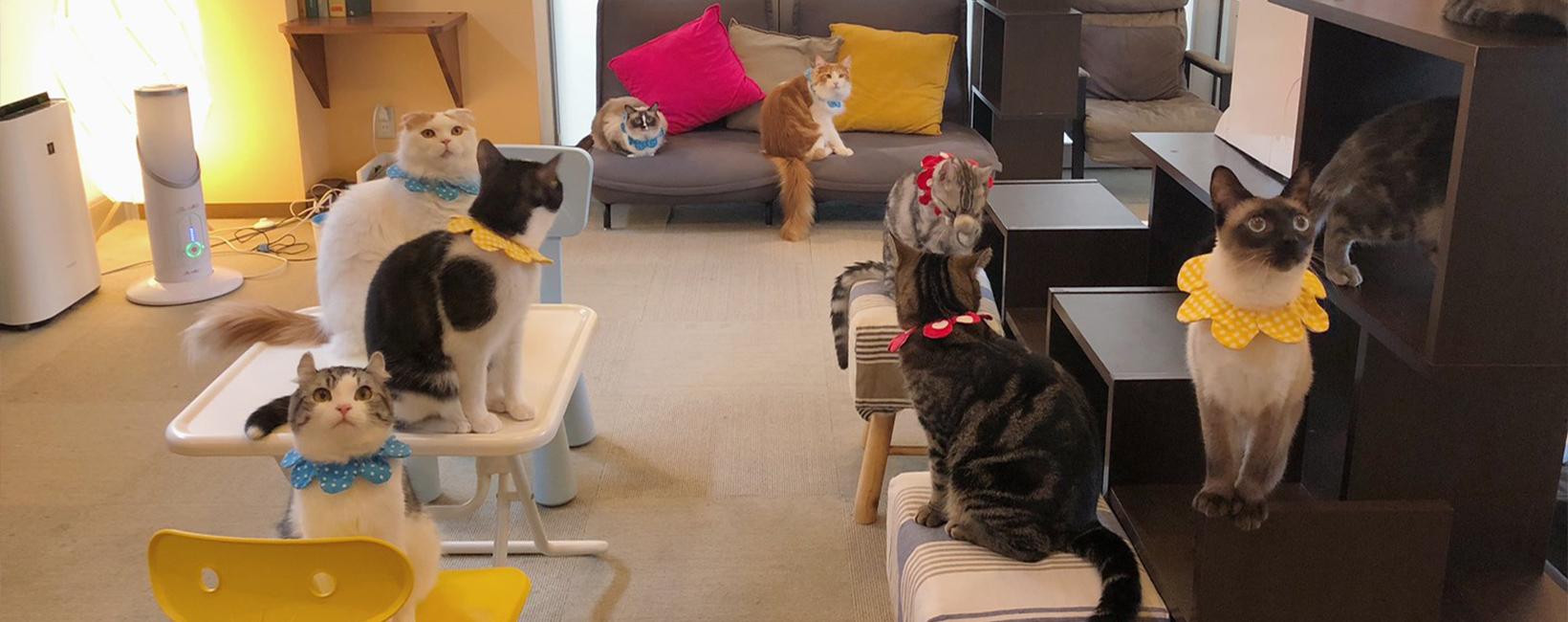 猫カフェ コックンの別荘 海老名店