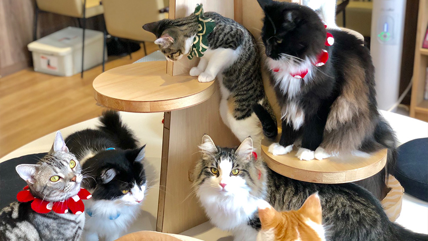 自由に撮影できる店内で、猫キャストのとっておきの一枚を