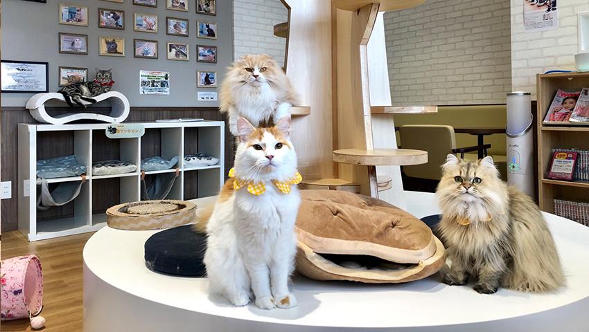 猫カフェ コックンの別荘 八王子店