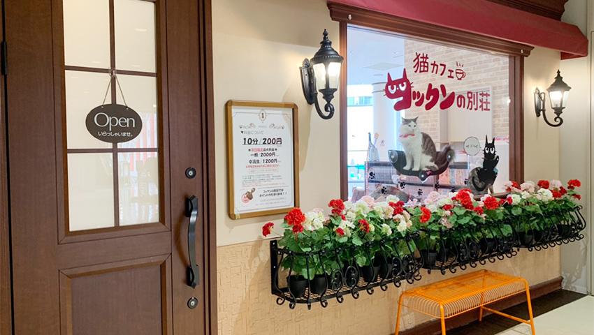 猫カフェ コックンの別荘 町田店